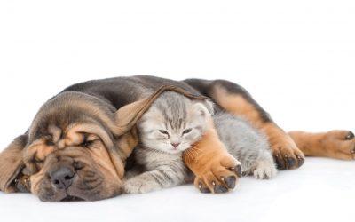 Internationale dag van de slaap